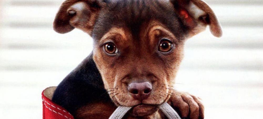 KINO SDK: O psie, który wrócił do domu