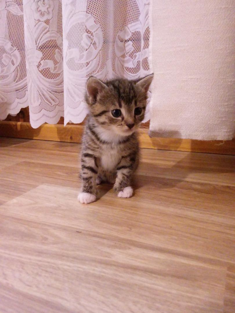 W superbly Oddam kotka w dobre ręce | Ogłoszenie VV39