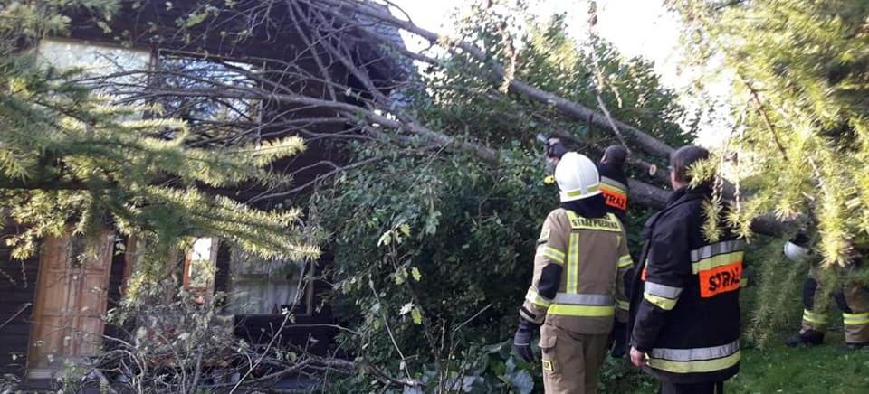 Szalejący wiatr łamał drzewa w Bieszczadach (FOTO)