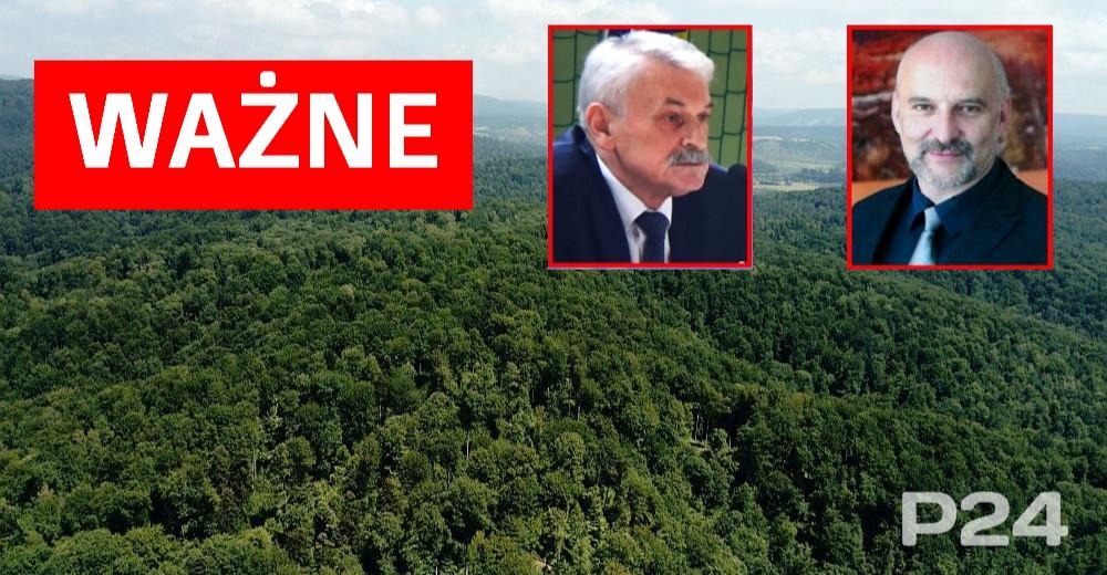 Samorządy chcą, by to człowiek rządził w lasach. Wysłały petycje do premiera Morawieckiego i Parlamentu Europejskiego