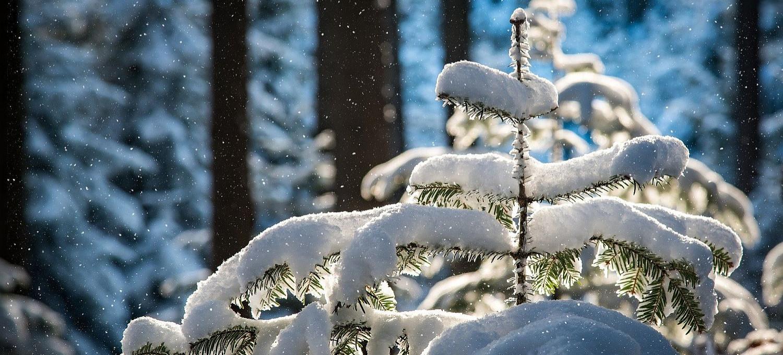 Powrót zimy? W nocy może spaść nawet 20 cm śniegu!