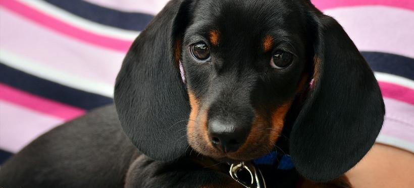 W Rzeszowie można bezpłatnie zaczipować i wykastrować psa