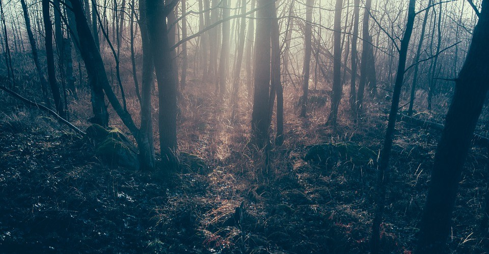IWONICZ: Ciało mężczyzny znalezione w lesie. Policja ustala tożsamość