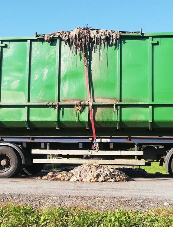 DOMARADZ: Wnętrzności i fekalia z ubojni wylewały się z ciężarówki (VIDEO, ZDJĘCIA)