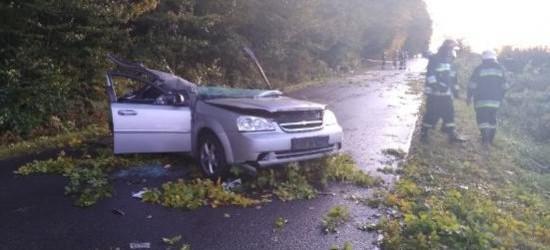 PODKARPACIE: Drzewo spadło na pojazd, nie żyje kierowca (ZDJĘCIA)