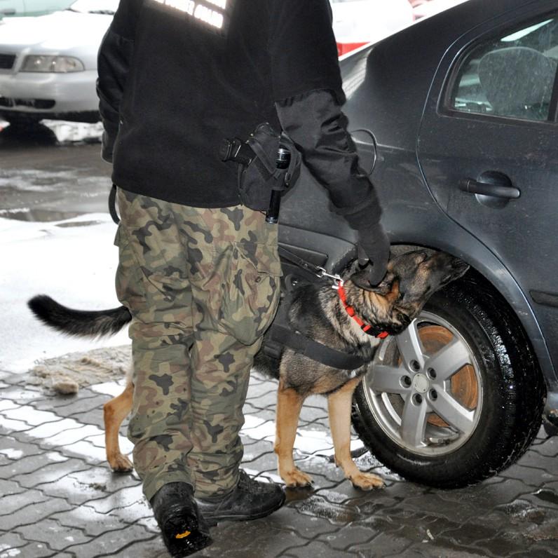 GRANICA: Nielegalna amunicja. Wywęszył ją Camel