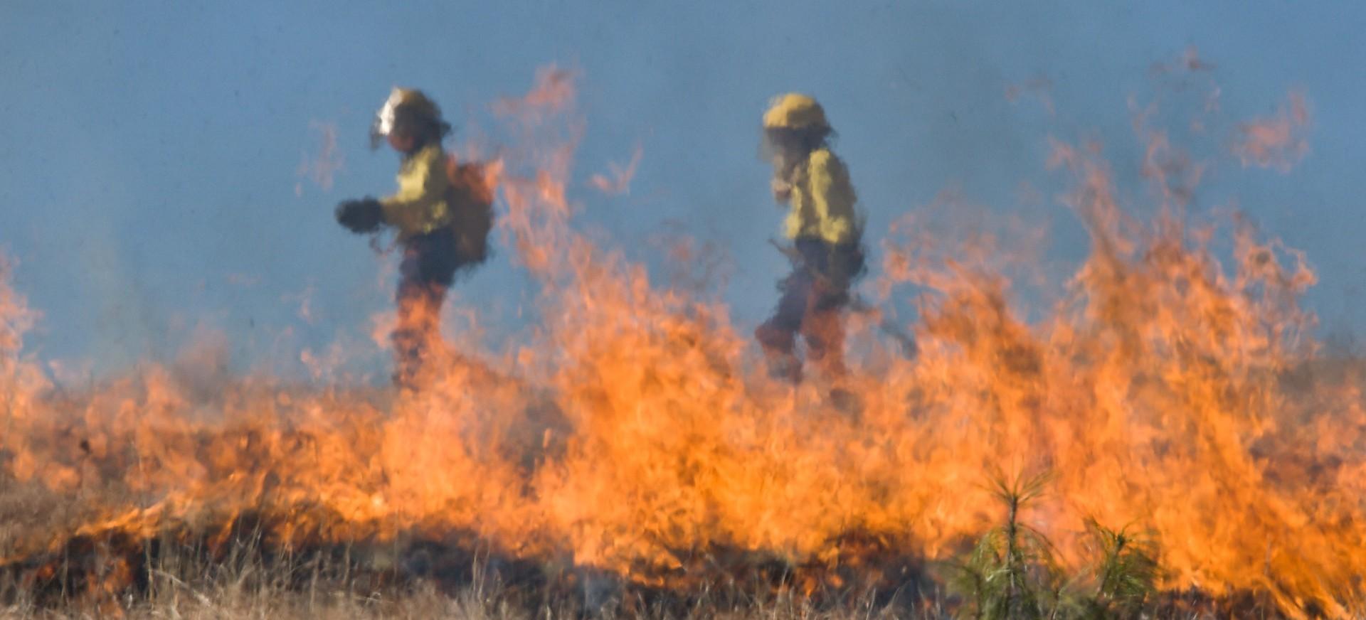 Wypalanie trawy = wielkie zagrożenie dla zwierząt i ludzi