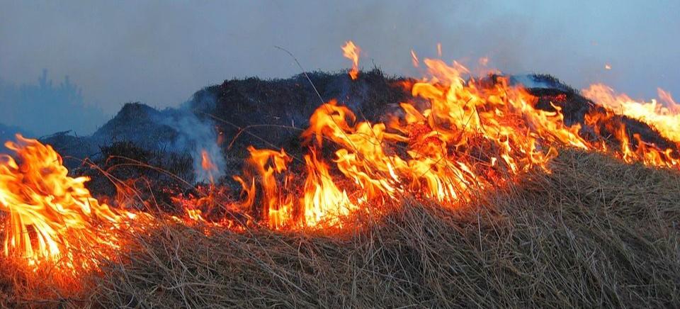 Śmiertelna ofiara wypalania traw na Podkarpaciu