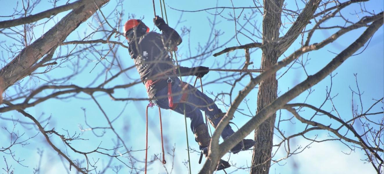 Śmiertelny wypadek podczas wycinki drzew. Nie żyje 26-latek