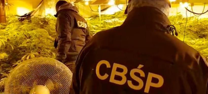 Rzeszowskie CBŚP zatrzymało 7 osób. Areszty za handel marihuaną