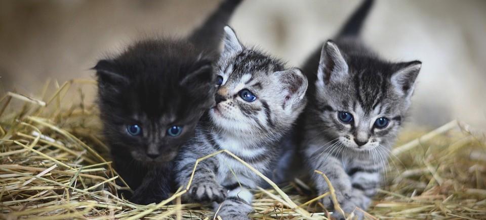 Bezdomne kociaki czekają na waszą pomoc