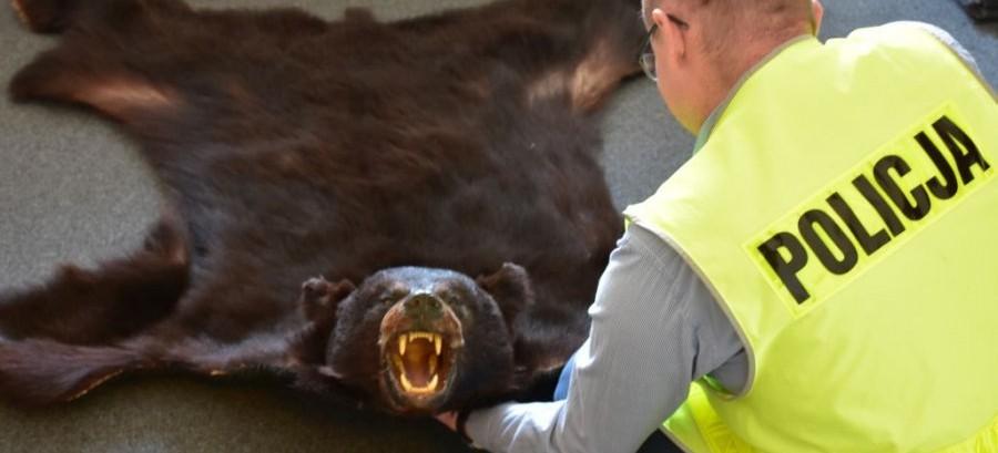 Chciał sprzedać skórę z niedźwiedzia! Grozi mu 5 lat więzienia