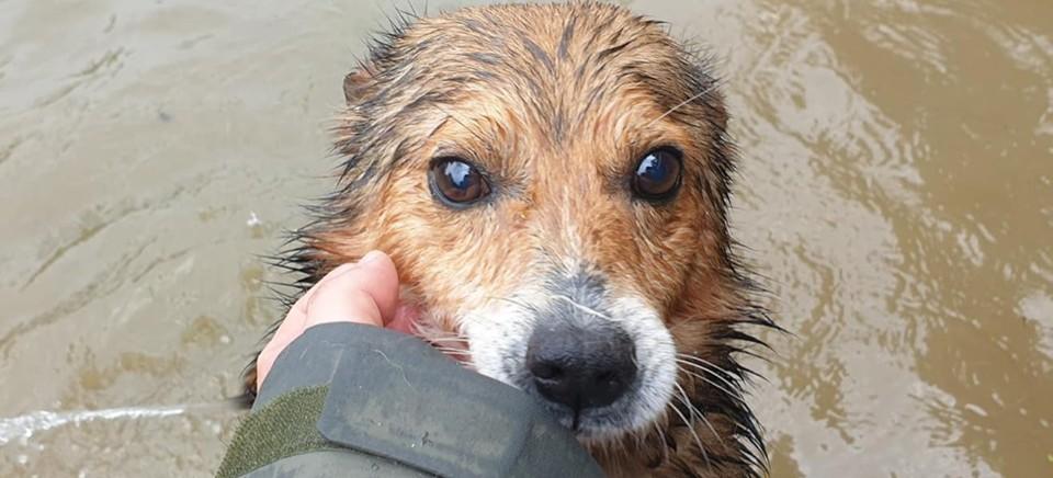 REGION: Schronisko dla psów zostało zalane! Potrzebna pomoc!