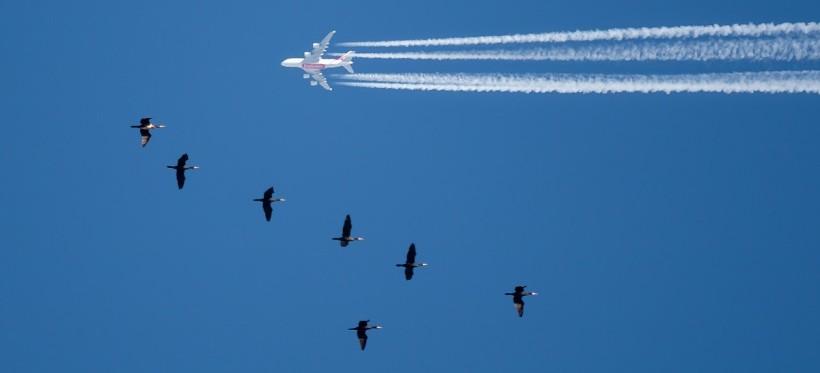 PODKARPACIE: Samolot i stado kormoranów. Niezwykłe ujęcie! (FOTO)
