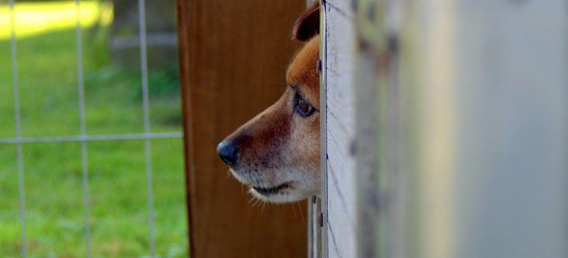 Awantura i znęcanie się nad psem