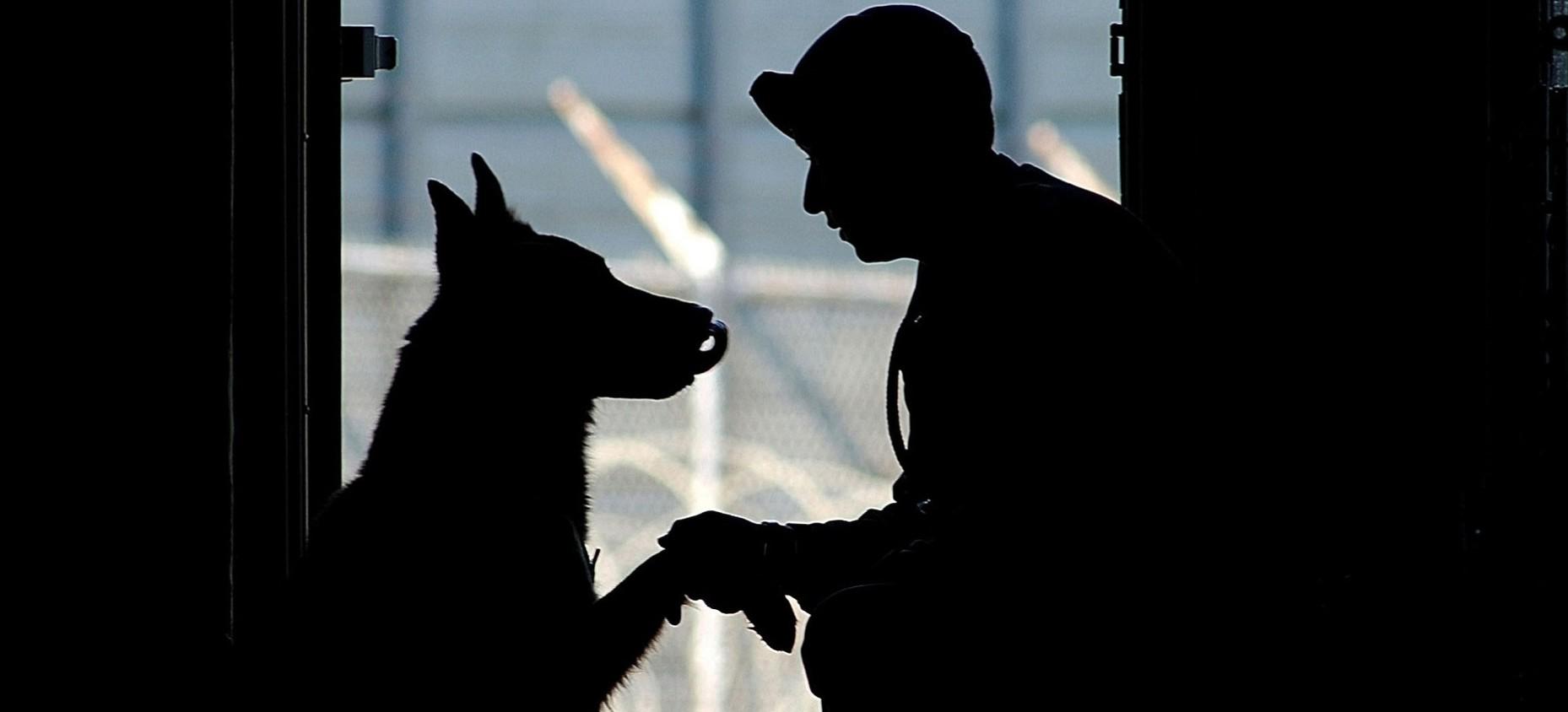 Pies Mambo miał nosa do przesyłki z psychotropami (FOTO)