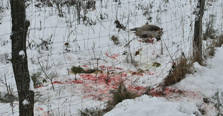 Kłusownictwo wciąż problemem. Zabito 265 dzikich zwierząt (ZDJĘCIA)