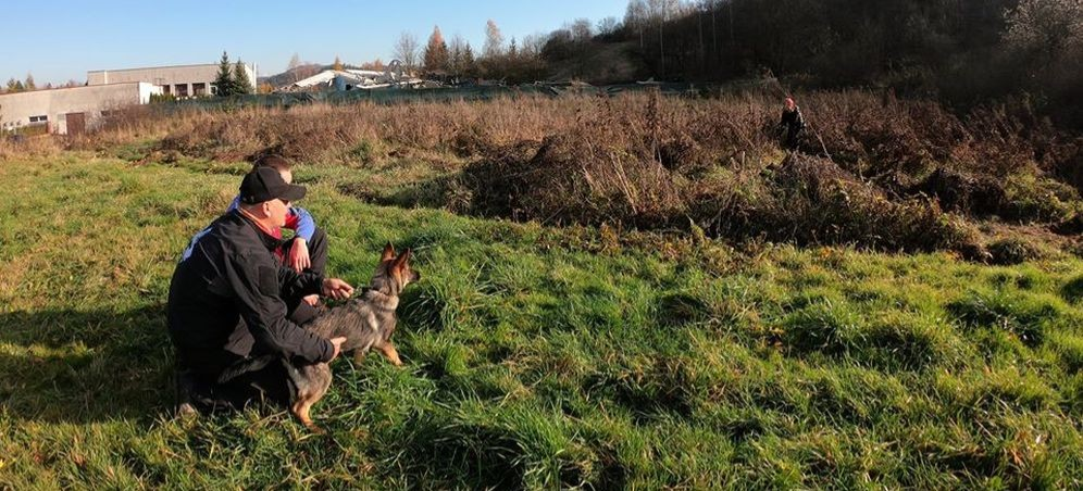 BIESZCZADY: Ratują życie, razem z ludźmi. Szkolenia psów ratowniczych (FOTO)