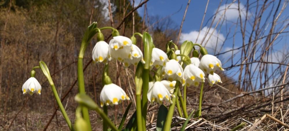 Wiosna tuż, tuż! Zdjęcia z Bieszczadów (FOTO)