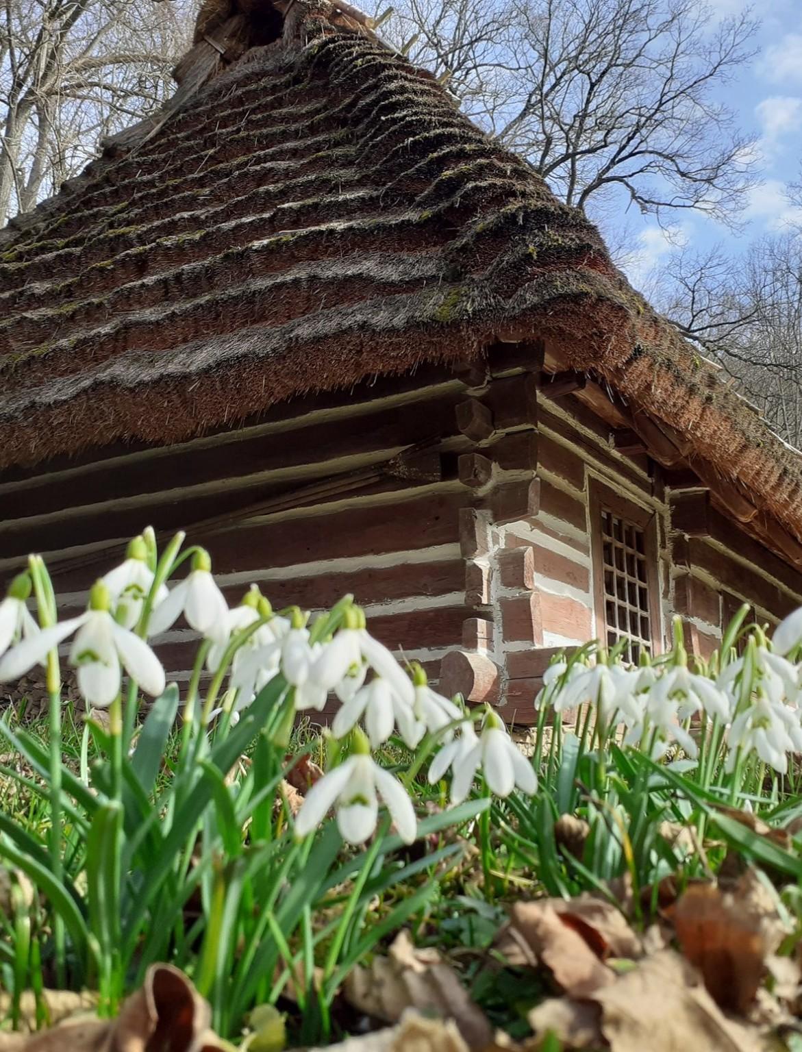 SANOK: W skansenie wiosna! (ZDJĘCIA)