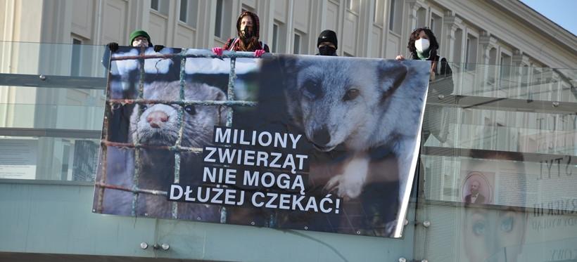 """Viva Rzeszów przypomina politykom o """"piątce dla zwierząt"""" (WIDEO)"""