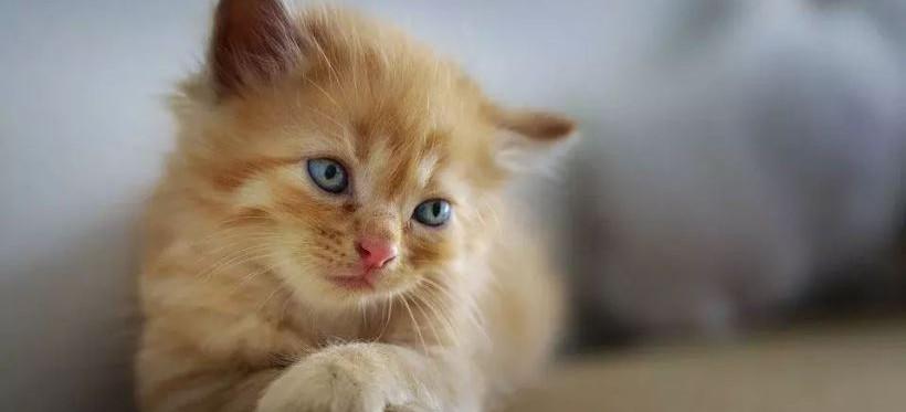 RZESZÓW. Fundacja Felinus apeluje o wsparcie dla bezdomnych kotów!