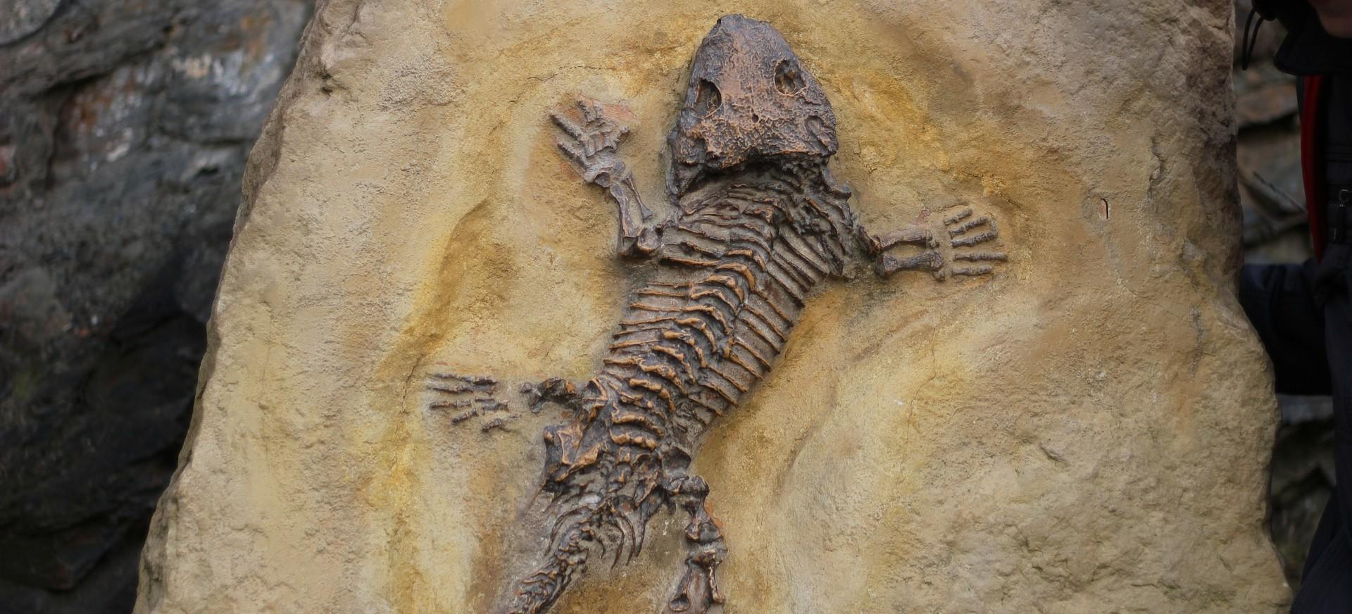 BESKO: Wyjątkowa wystawa skamieniałości. Wernisaż już 13 kwietnia