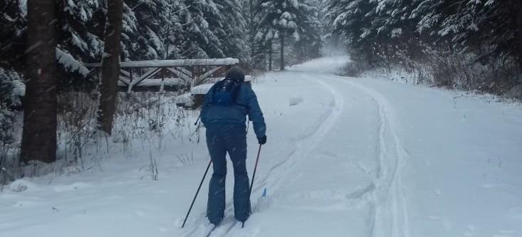 Zimowy las kusi – leśnicy zapraszają (ZDJĘCIA)
