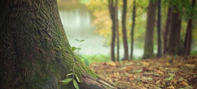 Od piątku obowiązuje zakaz wstępu do lasów i parków narodowych