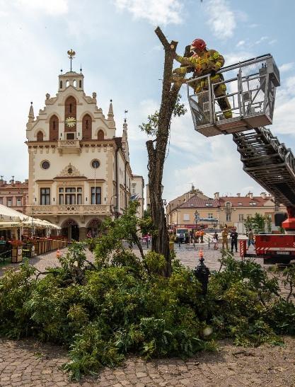 RZESZÓW. Akacja z Rynku wycięta. Będzie nowe drzewo! (ZDJĘCIA)