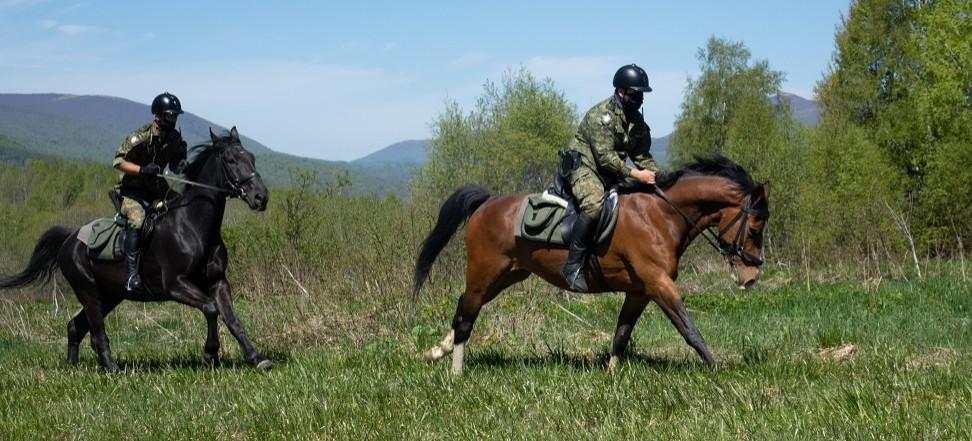 Patrole konne niezawodne na granicy w Bieszczadach!