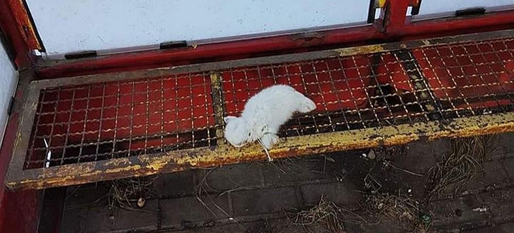 Znęcają się nad królikami? Policja szuka świadków. W sieci krążą zdjęcia