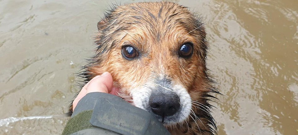 Psy z zalanego schroniska w Wadowicach Dolnych szukają domu!