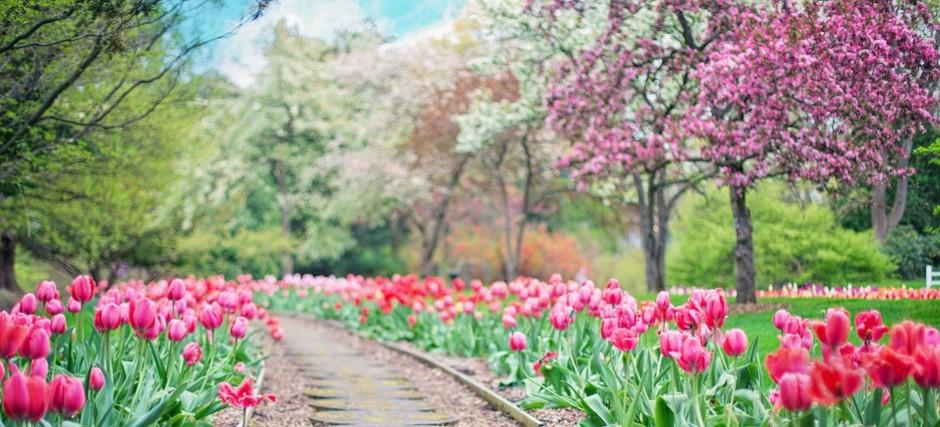 """NASZ PATRONAT: Targi ogrodnicze """"Wiosna w ogrodzie"""""""