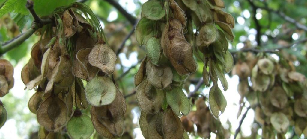Trwa zbiór nasion w lasach. To wyjątkowo dobry rok (FOTO)