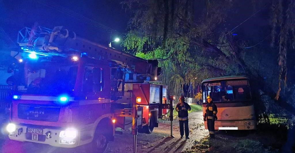 Drzewo spadło na autobus PKS Jarosław. Uszkodzona linia energetyczna