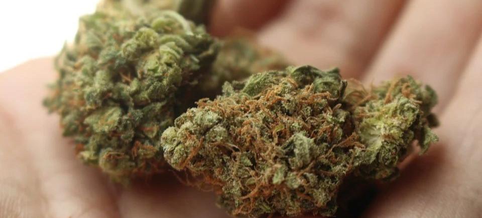 RZESZÓW. 25-latek zatrzymany za posiadanie marihuany