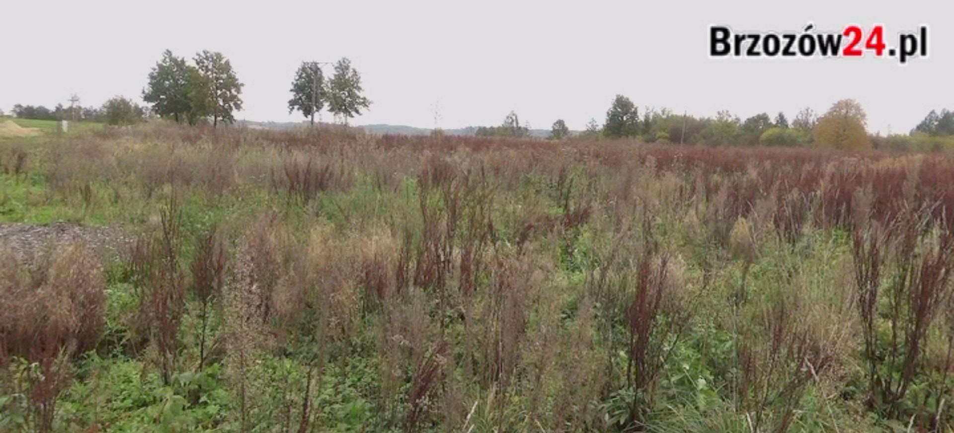 Przez cztery lata udało się… wykarczować teren (VIDEO)