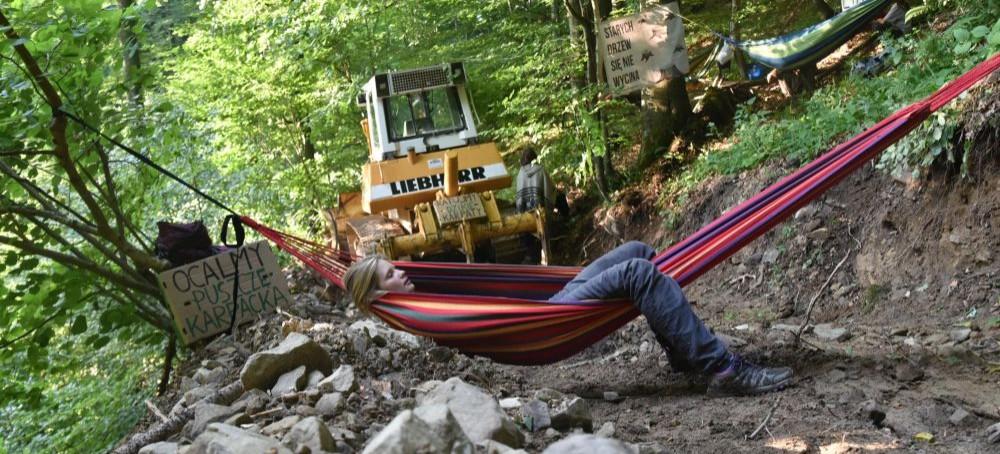 BIESZCZADY: Na hamakach bronią bieszczadzkie lasy przed wycinką (FOTO)