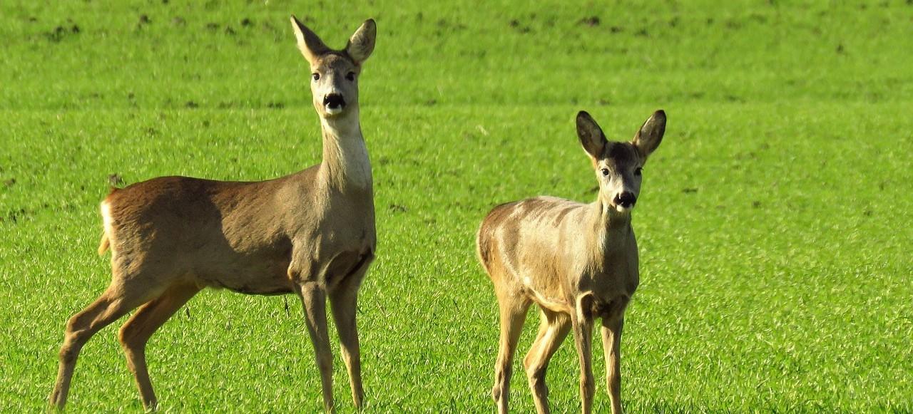 BIESZCZADY: Wypadki z udziałem dzikich zwierząt