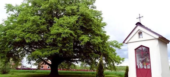 Lipa z Podkarpacia Drzewem Europy? Ostatnie dni głosowania!