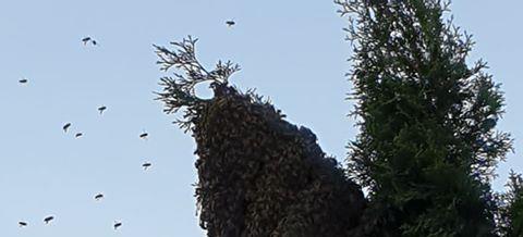 Strażacy walczą z rojem pszczół przed blokiem na Rejtana (FOTO, WIDEO)