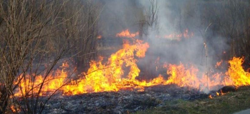 Wypalanie traw w okolicach Rzeszowa. Policja interweniuje