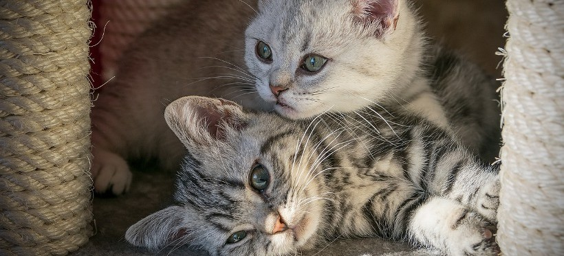 RZESZÓW. Dzień Kota 2020. Wesprzyj bezdomne kociaki z Fundacji Felinus!