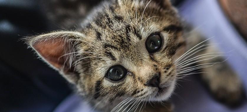 Zabił małego kotka. Grozi mu do 3 lat więzienia