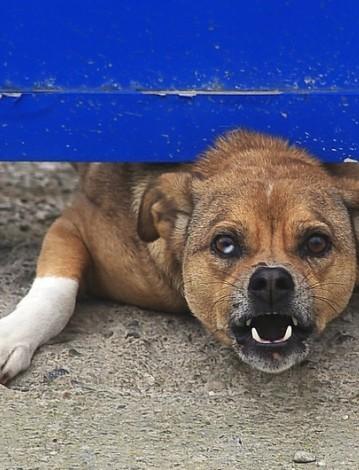 PRZEWORSK: Pies pogryzł 7 letnią dziewczynkę
