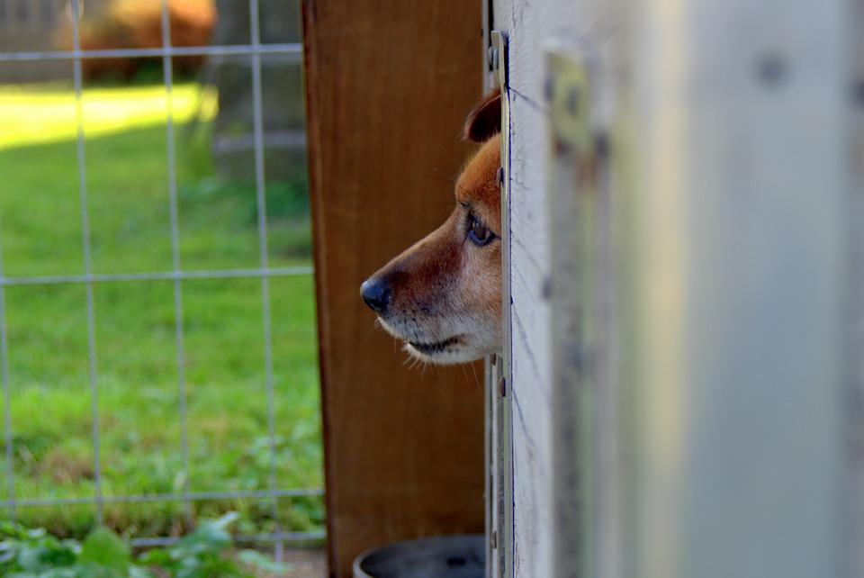 animal-shelter-1558651_960_720