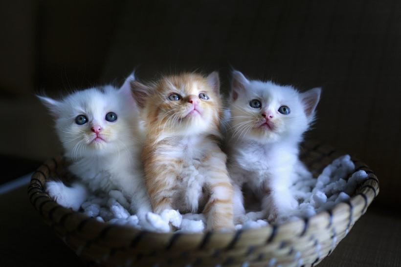 cat-3266675_960_720