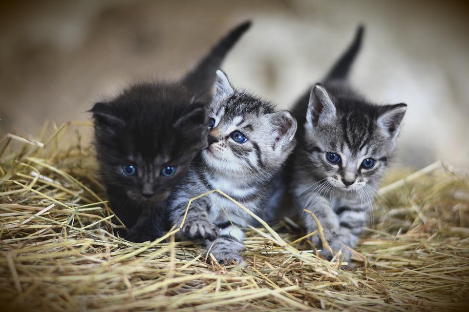 cat-3535404_960_720
