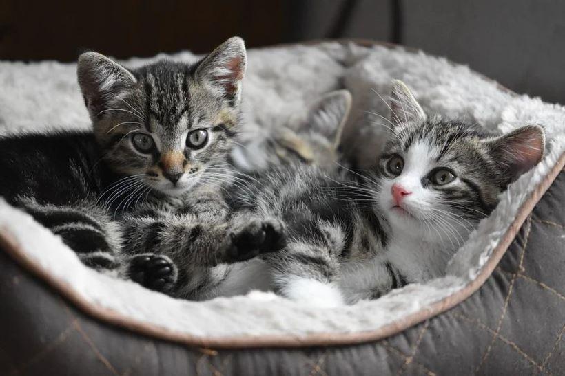cat-4282123_960_720